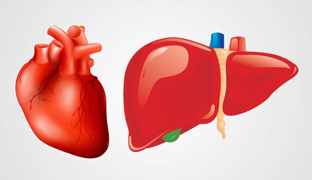 simultaneous support of heart and liver health