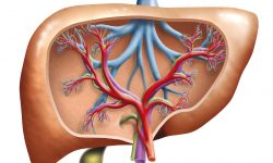 Do You Have High Liver Enzymes or a Fatty Liver?