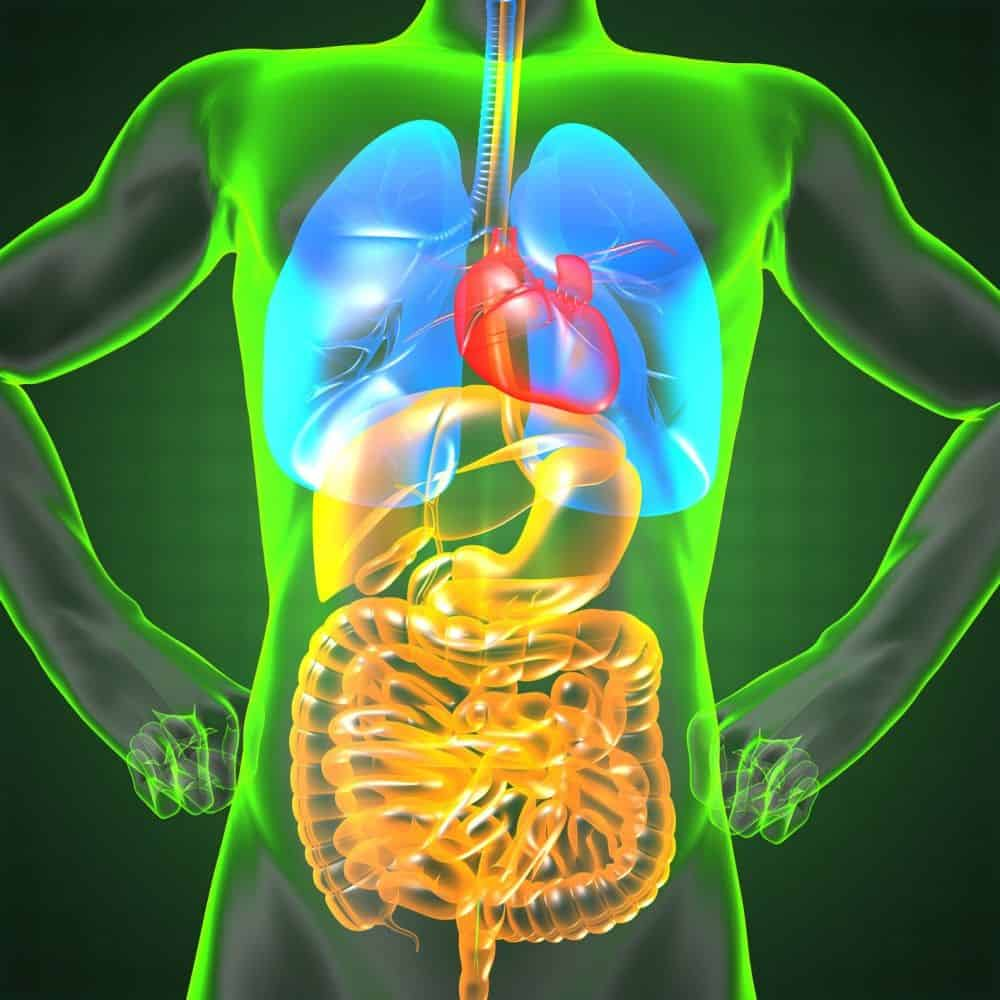 The Importance Of Bile Flow And Liver Health