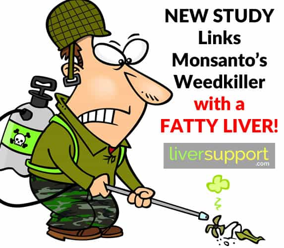 New Study Links Monsanto's Weedkiller with a Fatty Liver
