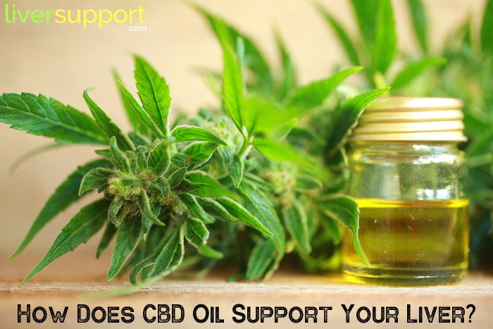 How Does CBD Oil Support Your Liver