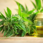 How Does CBD Oil Support Your Liver?