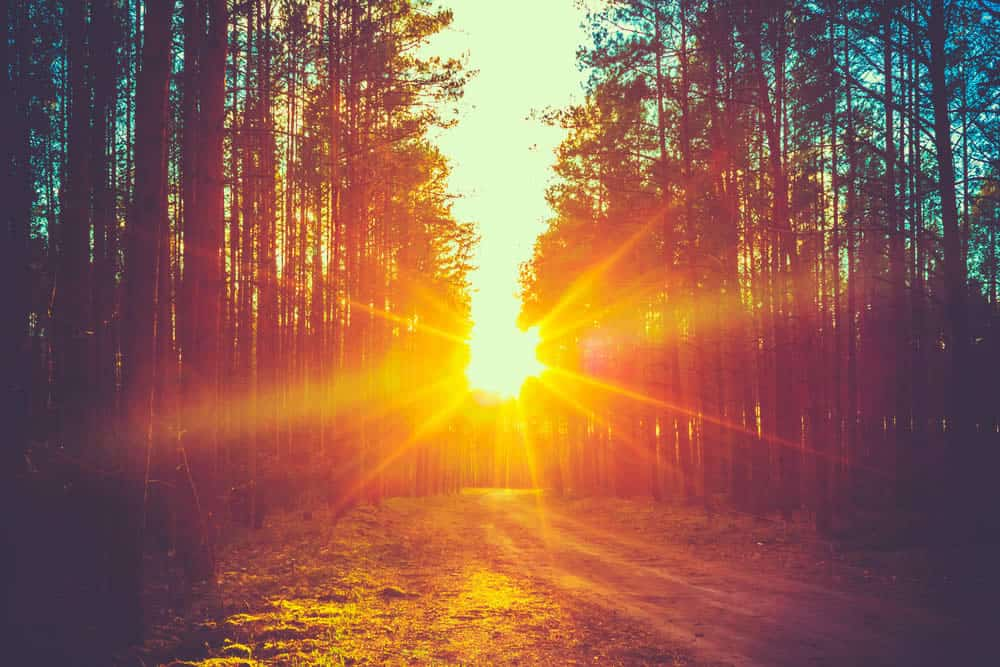 Can sunlight actually impact your liver's health?